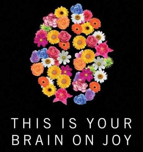 This is your brain on joy